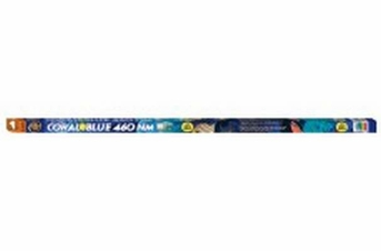 Zoo Med Coral Blue 460 NM T8 Lamp 36in