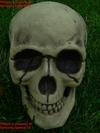 Realistic Skeleton Skull Halloween Prop Decoration
