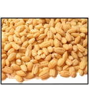 Organic HULLED BARLEY - 5 LBS - OUT OF STOCK