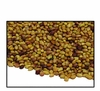 Organic RED CLOVER SEED - 2 LBS - OUT OF STOCK  (Crimson Available)