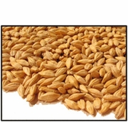 Organic WHOLE BARLEY (for SPROUTING - with hull) - 25 LBS - OUT OF STOCK