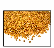 Organic YELLOW MUSTARD SEED (non-sprouting uses) - 5 LBS