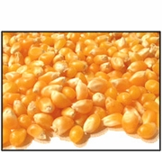 Organic YELLOW POPCORN - 25 LBS - OUT OF STOCK