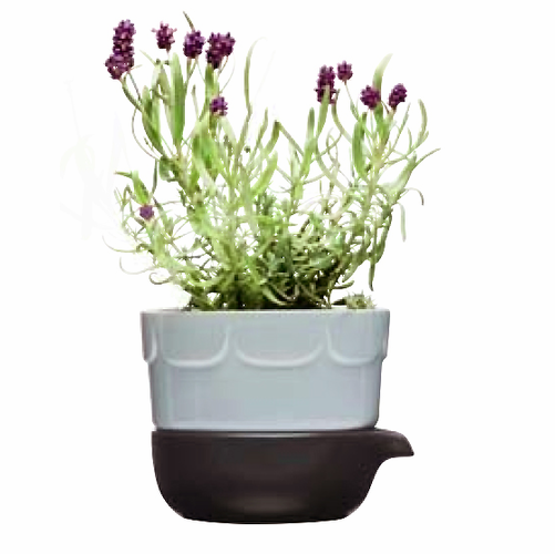 Green Herb Pot, Lavender Blue