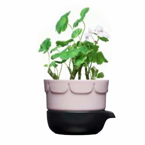 Green Herb Pot, Pink