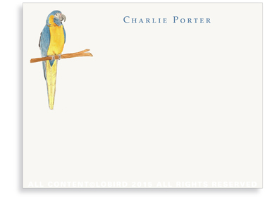 Flat Note Cards - macaw