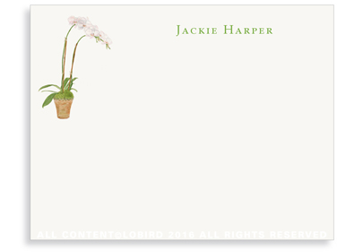 Flat Note cards - white orchid