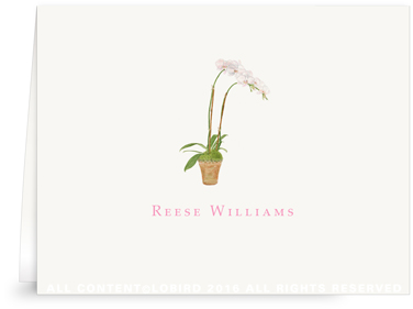 Folded note cards - white orchid