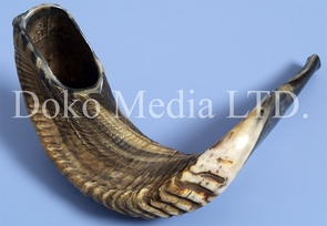 Authentic Natural Ram's Horn Shofar