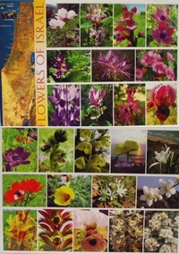 Flowers of Israel Placemat