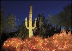 Arizona Reflections<br>Boxed Card Sets