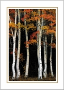 Aspen Contrast<br>Boxed Set