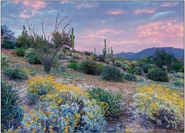 Blooming Sonoran Desert