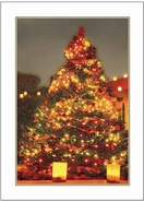 Christmas Tree & Luminaria