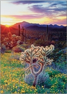 Cactus & Wildflowers<br>Boxed Set