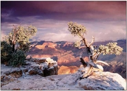 Grand Canyon In Winter<br>Boxed Set