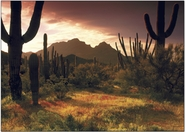 """Lower Sonoran Sunrise"""