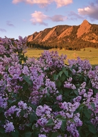 Personalize<br>Flatirons & Lilacs