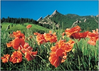 Personalize<br>Poppies & Flatirons
