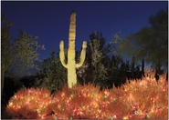 Saguaro & Christmas Lighting