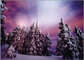 Winter Night<br>Boxed Set of 10 Cards