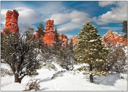 Winter Pines and Redrocks