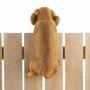 "Climbing Golden Retriever ""Koda"" Decor"