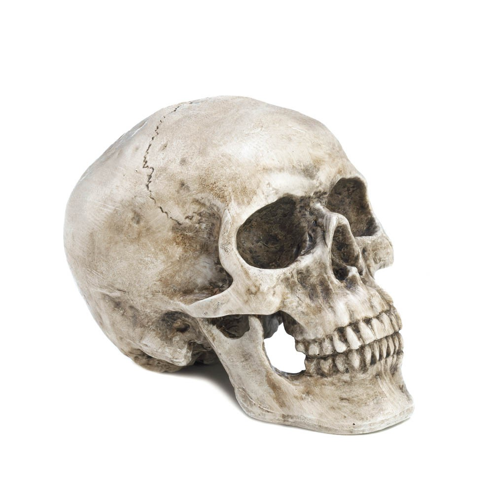 decorative skull head wholesale at koehler home decor