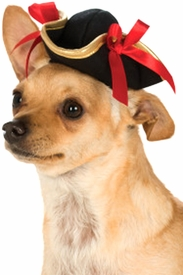 Pirate Girl Hat for Pets - click to enlarge
