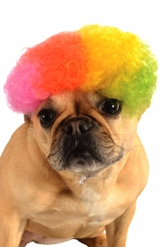Rainbow Afro Wig for Pets - click to enlarge