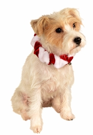 Scrunchie Candy Cane Pet Collar
