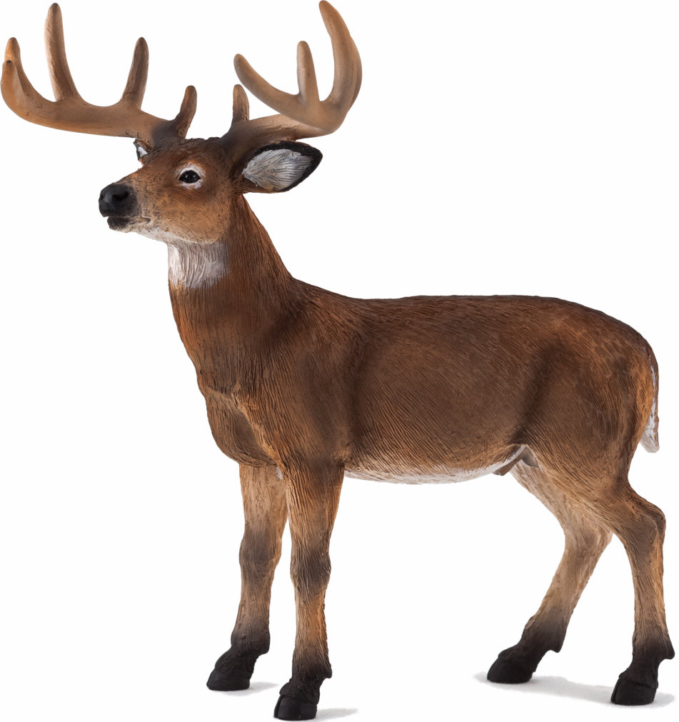 Mojo -  Woodland - White Tailed Deer - Buck