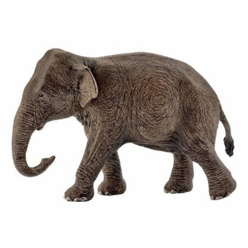 Schleich - Asian Elephant - Female - Exclusive