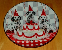 Collector Plate Dalmatian Celebration Comical Dalmatians Coll Hamilton 1996 Out of Stock