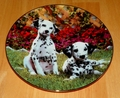 Collector Plate Sweet Spots Comical Dalmatians Collection Hamilton 1995