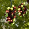 100 Micro-Bulb 5-Cluster Multicolor Grapevine String Light