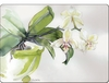 White Orchid - CALA Placemats