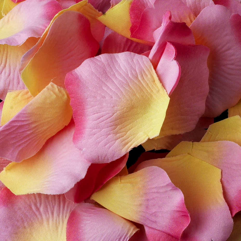 Two Tone Pink With Yellow Rose Petals Color 24 100 Petals In A Bag