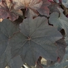 leaf<BR>BROWN