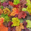 shop <br>ALL HEUCHERA