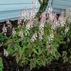 shop for<br>TIARELLA