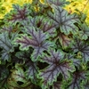 shop<br>TIARELLA