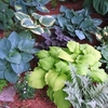 THE FUTURE OF HOSTAS...<BR>what's happening & how it affects us all