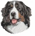 bmd002 Bernese Mountain Dog (small or large design)