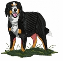bmd014 Bernese Mountain Dog (small or large design)