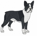 boston014 Boston Terrier (small or large design)
