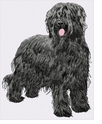 briard010 Briard (small or large design)