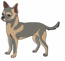 chihuahua010 Chihuahua (small or large design)