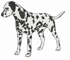 dal003 Dalmatian (small or large design)