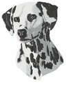 dal014 Dalmatian (small or large design)